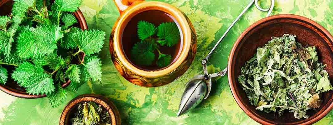 Hvad er brændenælde te? 5 ting du ikke vidste om brændenælden